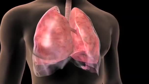 3D Animation Human Lungs