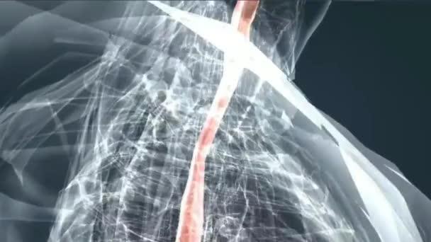 Trávicí systém jícnu, žaludku, tenkého střeva