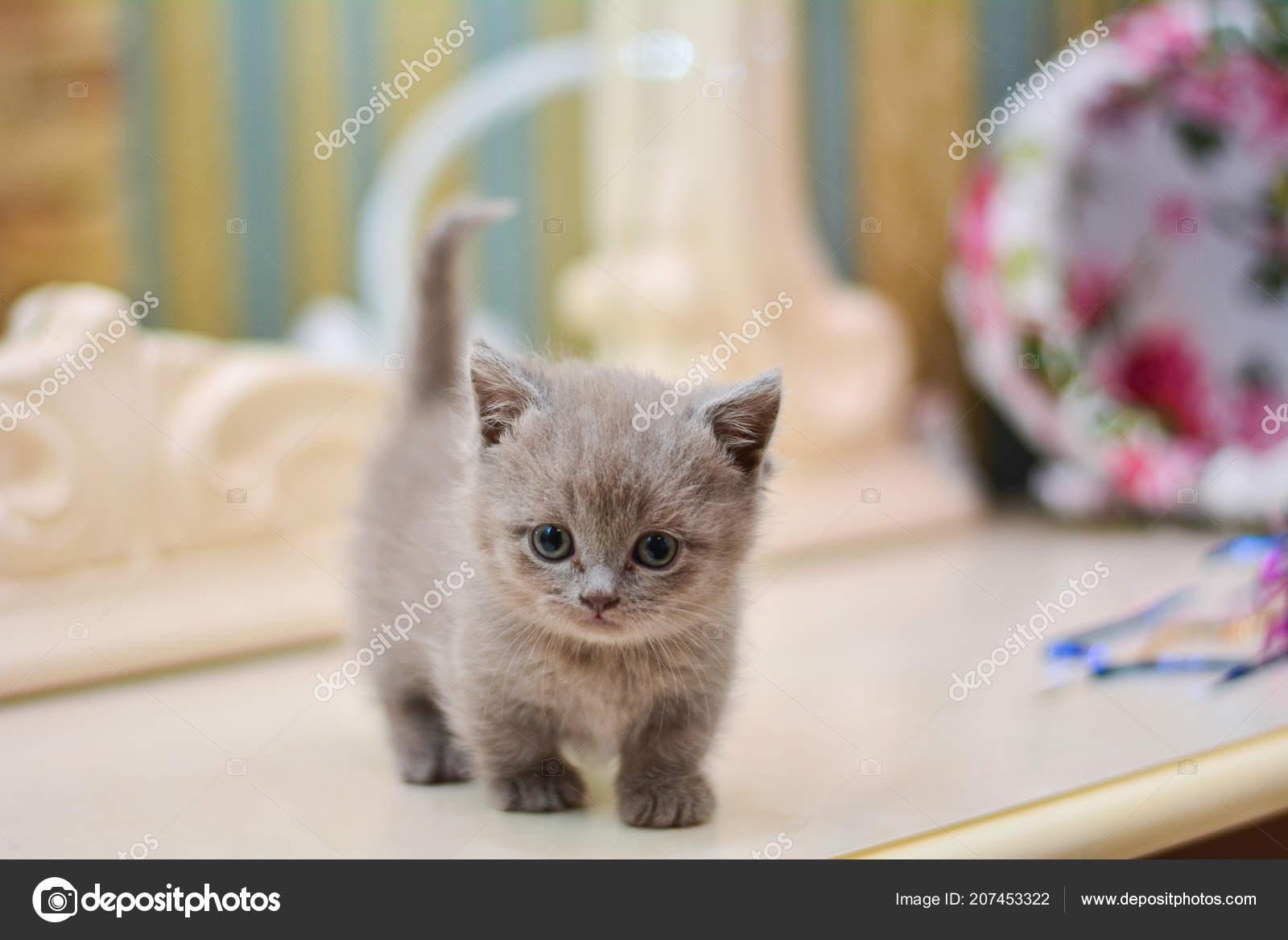 kitty cat - Traducere în română - exemple în engleză | Reverso Context