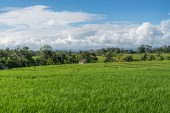 Fotografie scenic view of field with green grass and blue cloudy sky in ubud, bali, indonesia