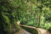 Fotografie scenic view of stream in green forest in ubud, bali, indonesia