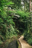 Photo scenic view of stream in green forest in ubud, bali, indonesia