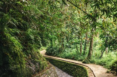 scenic view of stream in green forest in ubud, bali, indonesia