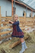 Photo smiling kid touching goats in stable at farm