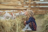 Fotografie side view of kid going to kiss goat at barn