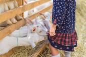 Fotografie zugeschnittenes Bild des kleinen Ziegen beißen Kinder Kleid auf der farm