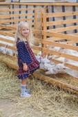 Fotografie funny goats biting kids dress at farm