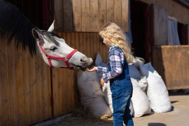 Side view of kid feeding horse from hand at farm stock vector