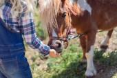 Photo cropped image of kid feeding cute pony at farm