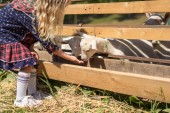 cropped image of kid feeding goats at farm
