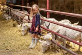 Fotografie adorable kid leaning on fences in barn and looking at goats