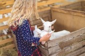 Fotografie side view of kid hugging goats at farm