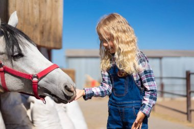 Side view of kid feeding white horse at farm stock vector