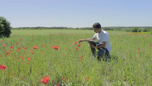 The researcher is studying poppy flowers on a laptop