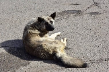 A homeless dog lies on the asphalt and looks sadly at you