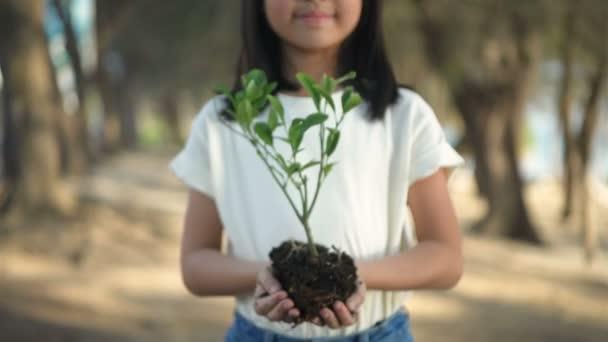 Erdőtelepítési koncepció. Egy gyönyörű nő kinyújtott előtte egy fát. 4k felbontás.