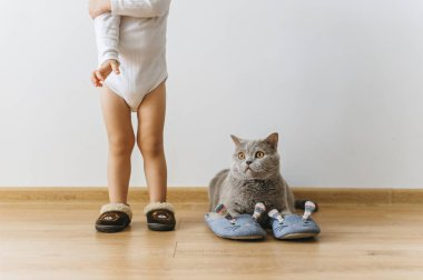 cropped shot of little boy and grey british shorthair cat in sleepers at home