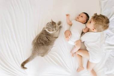 overhead view of cute little brothers in white bodysuits and grey cat lying on bed together at home