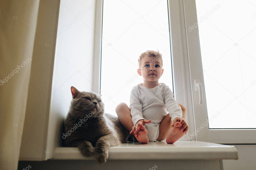 cute little child with grey british shorthair cat sitting on windowsill at home and looking away