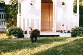 zár megjelöl kilátás az aranyos kis labrador kölyök a zöld fű