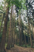 Photo low angle view of green tall trees in beautiful forest
