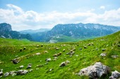 beautiful view of flock of sheep grazing on valley in Durmitor massif, Montenegro