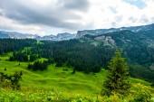 krásné zelené údolí s les a hory v pozadí v masivu Durmitor, Černá Hora