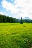 Fotografie krásné zelené údolí, lesů a modrá obloha v masivu Durmitor, Černá Hora