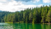 Fotografie green forest and beautiful glacial Black Lake in Montenegro