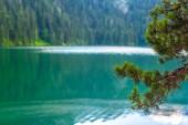 wunderschöner schwarzer Gletschersee und Kiefernzweige in Montenegro