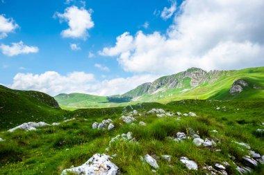 Stones on grass in valley of Durmitor massif, Montenegro stock vector