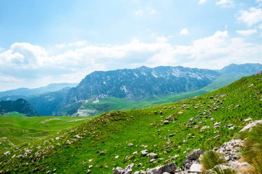Flock of sheep grazing on green valley in Durmitor massif, Montenegro stock vector