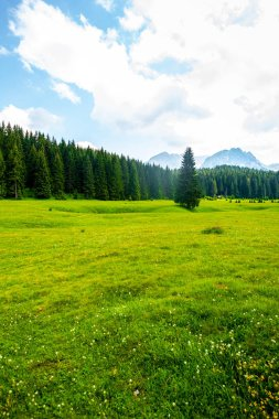 Beautiful green valley with forest and blue sky in Durmitor massif, Montenegro stock vector