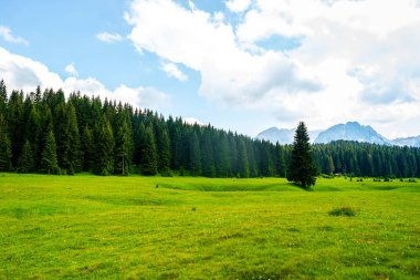 Beautiful green valley with forest in Durmitor massif, Montenegro stock vector