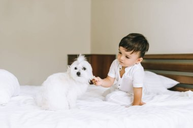 adorable little child feeding bichon dog in bed