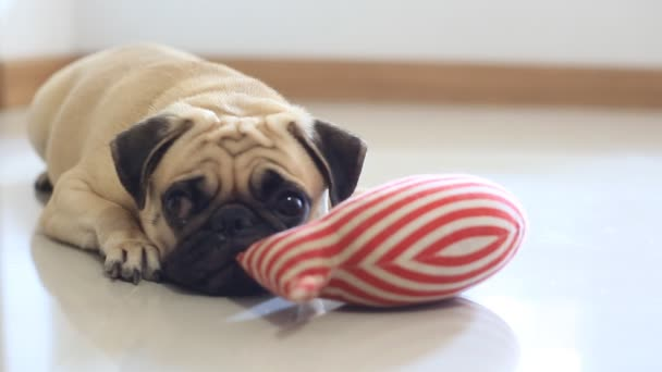 Close-up face of Cute pug dog rest by chin and tongue sticking out lay down on tile floor