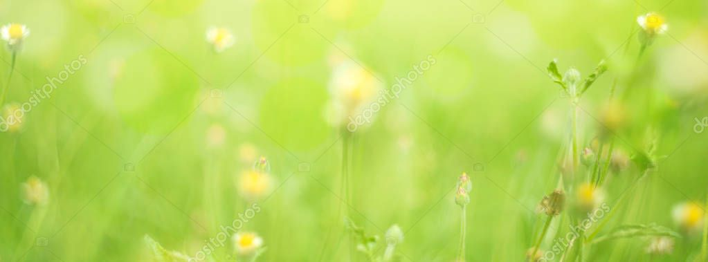 Spring or summer season abstract nature background with grass out of focus