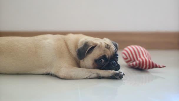 Közelkép arc aranyos mopsz kiskutya kutya a kockakõre tüsszögés