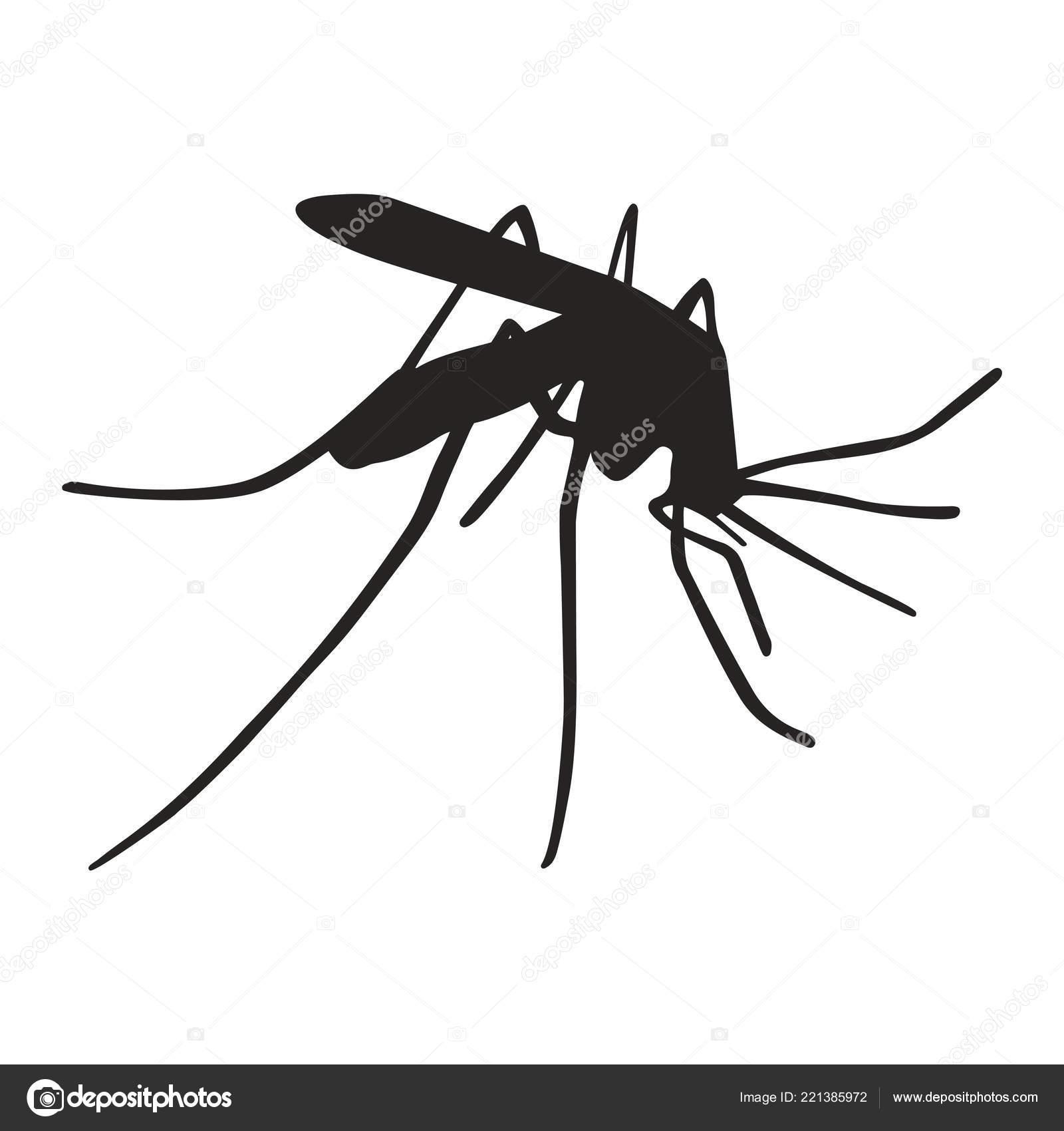 Sagoma Zanzara Del Segno Nero Sagoma Zanzara Chiuda Isolato Sfondo