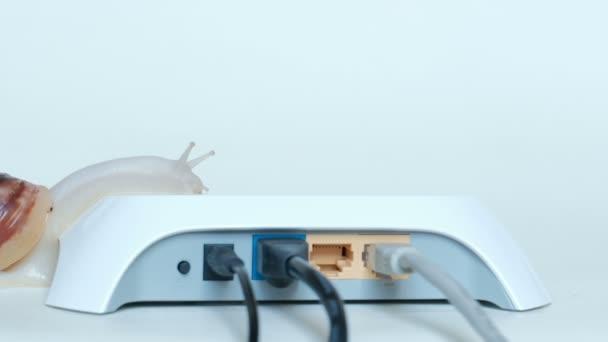 Jeden velký šnek pomalu plazí na bílé router s dráty. Pomalá rychlost internetu a přenosu dat v místní síti.