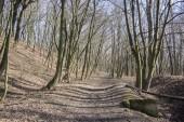 Nemosicka stran lesem na konci zimního času, slunce v pobočkách, způsobem přes úžasné přírodní oblasti, relaxační místo