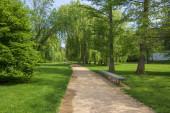 Veřejný park v létě na slunci s dřevěnou lavičkou, krásnou vrbovou uličkou a písečnou pěšinu