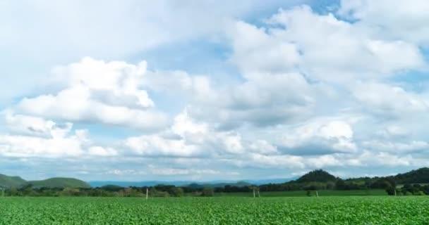 kleine Maispflanzen, die in Hügeln zwischen Wolken wachsen, die sich über den blauen Himmel bewegen