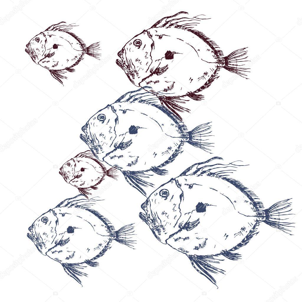 Seafood Restaurant Vector Poster Or Menu Premium Vector In Adobe Illustrator Ai Ai Format Encapsulated Postscript Eps Eps Format