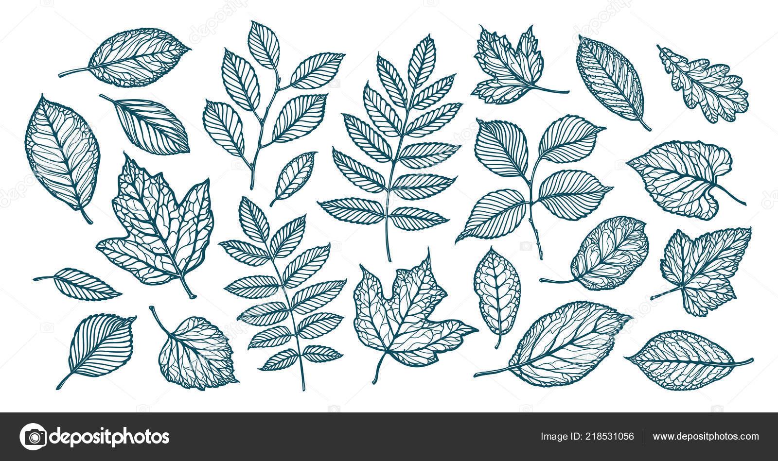 Hojas árbol Decorativo Naturaleza Conjunto Elementos Ilustración