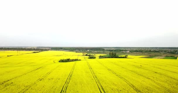 Nekonečné řepkového pole fron ptačí pohled. Znásilňování pole. Žlutou řepkové pole a modrá obloha s mraky za slunečného počasí. Zemědělství.