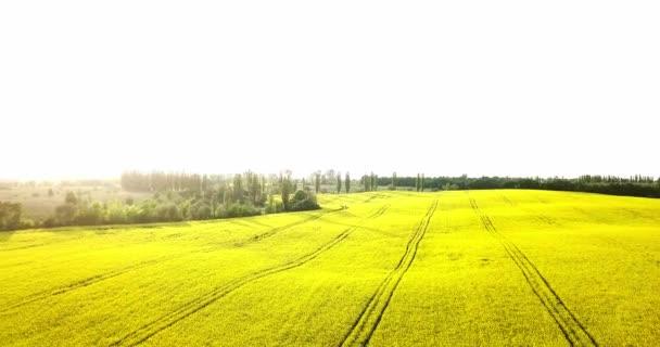 Végtelen Repce field sza a madár-eye kilátás. Repce field. Sárga repce mezők és a kék ég, a felhők, napsütéses időben. Mezőgazdaság.