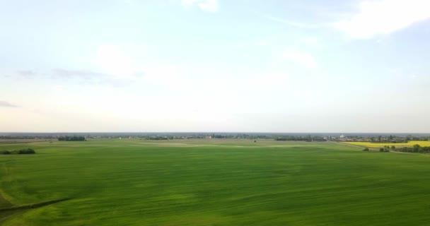 Légifotó a fiatal zöld búza mező esti naplemente ég. Búza érési fülei. Mezőgazdaság. Természetes termék. Agricaltural táj.