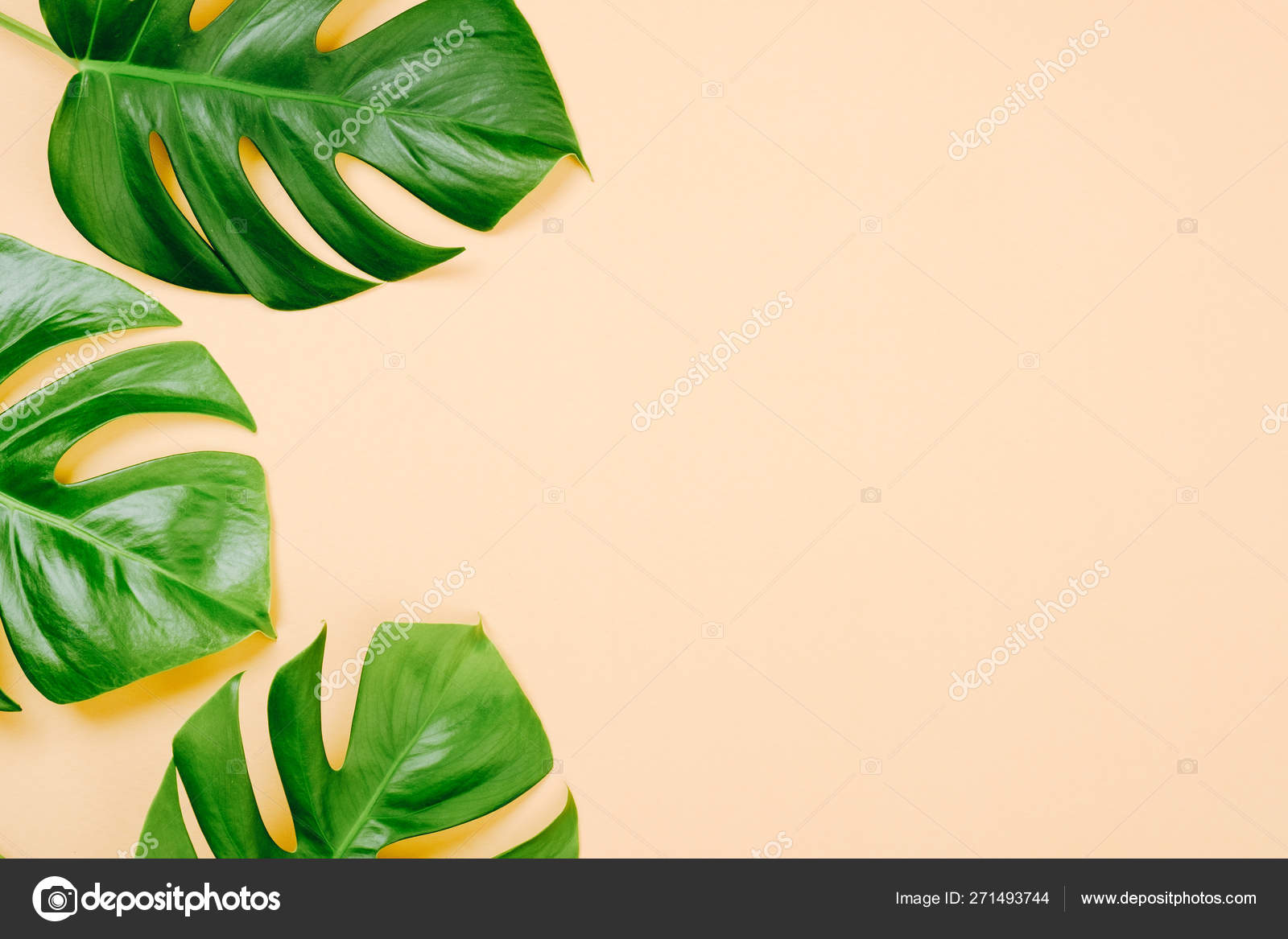 Tropical Leaves Monstera On Yellow Background With Space For A Text Flat Lay Top View Pastel Colors Summer Minimal Concept Stock Photo C Savanevich 271493744 Why are the leaves on my monstera limp and drooping? tropical leaves monstera on yellow background with space for a text flat lay top view pastel colors summer minimal concept stock photo c savanevich 271493744