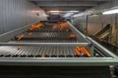Photo storage and sorting of carrots, in warehouses